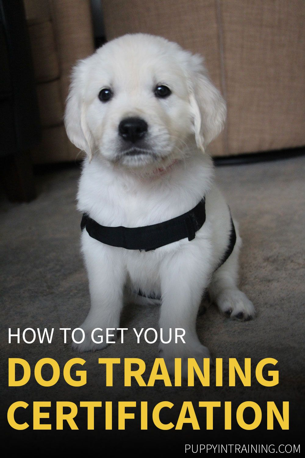 Dog Training Certification How Do I Become A Certified Dog