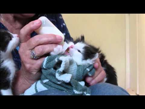 4 03 Momma Cat Lily Bottle Feeding 4 Week Old Kittens Youtube Cute Kitten Gif Beautiful Cats Pictures Pregnant Cat