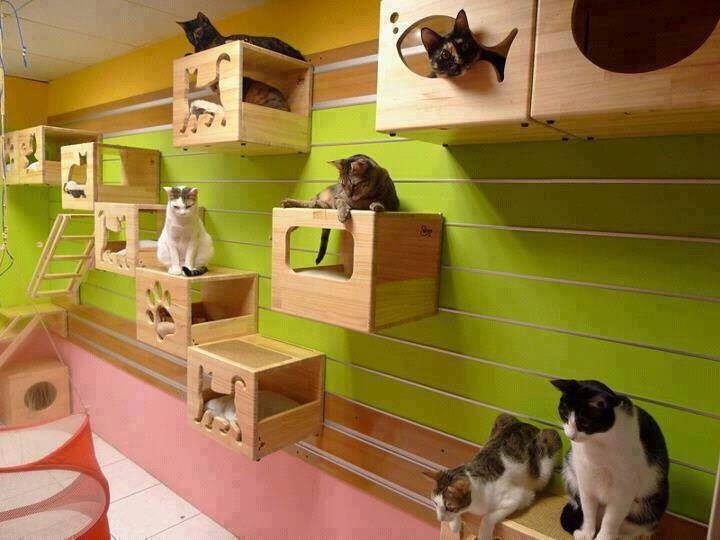 Casas Para Gatos Refugio Para Gatos De Mdf Fibrofacil Cuarto