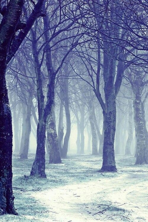 Misty Forest Discovered By Bellaangels On We Heart It