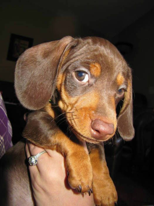 National Puppy Day In L A And Southern California March 23 2012