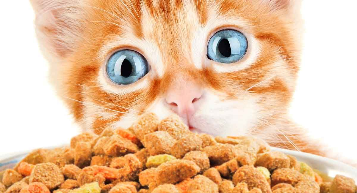 Best Dry Kitten Food Discover The Best Dry Food For Kittens Kitten Food Kitten Food Brands Kitten
