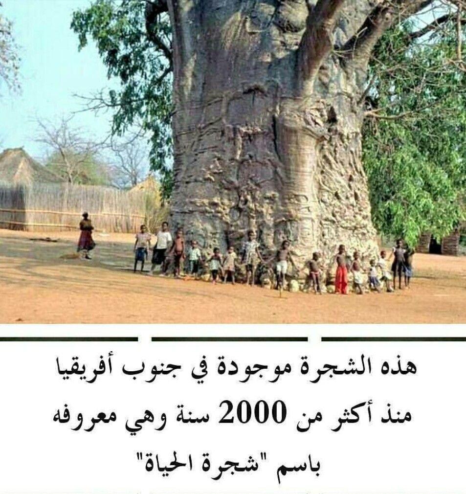 شجرة الحياة Tree Tree Of Life Trees To Plant