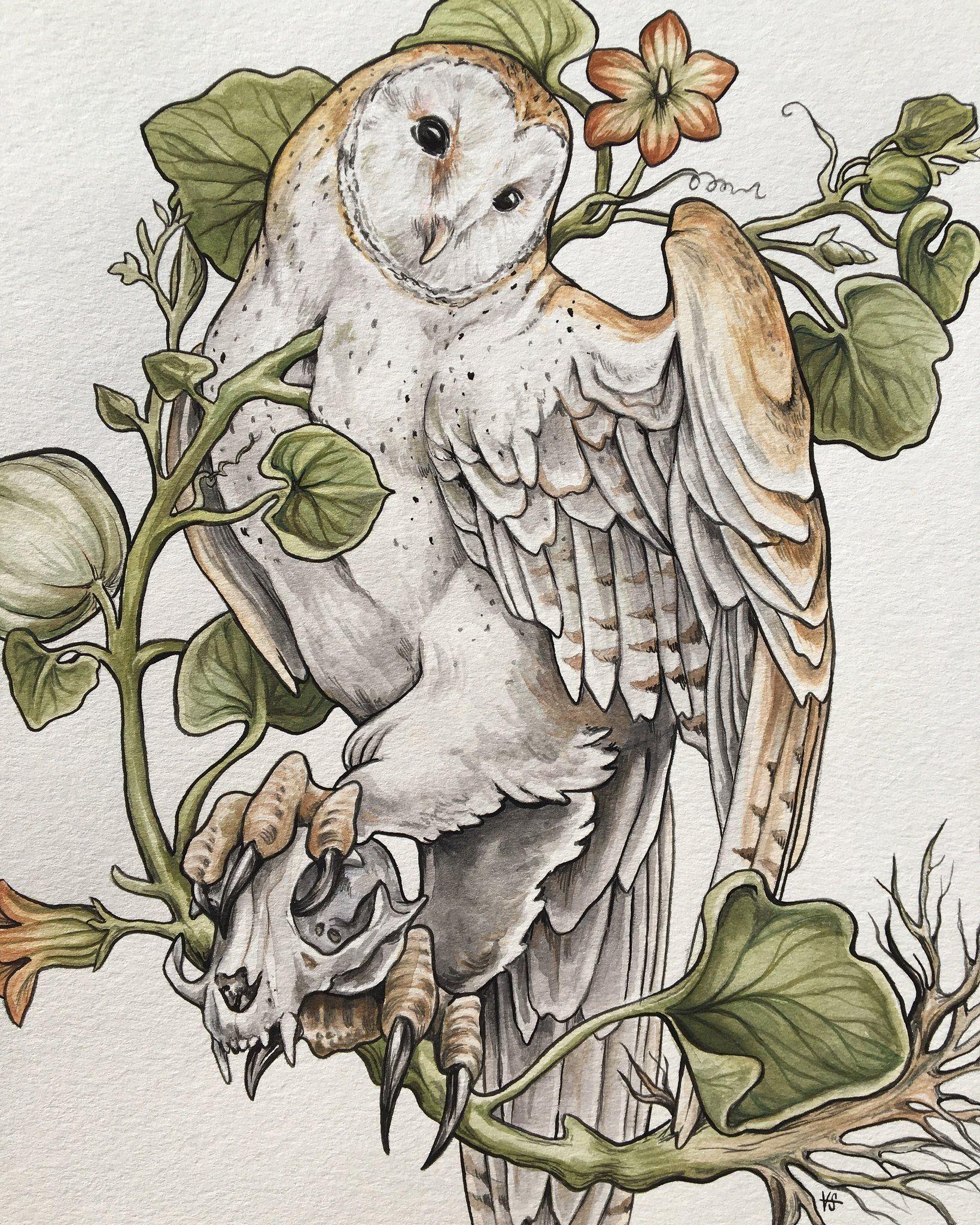 Barn owl – vsteiner