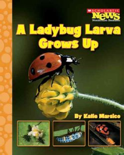A Ladybug Larva Grows Up (Paperback)