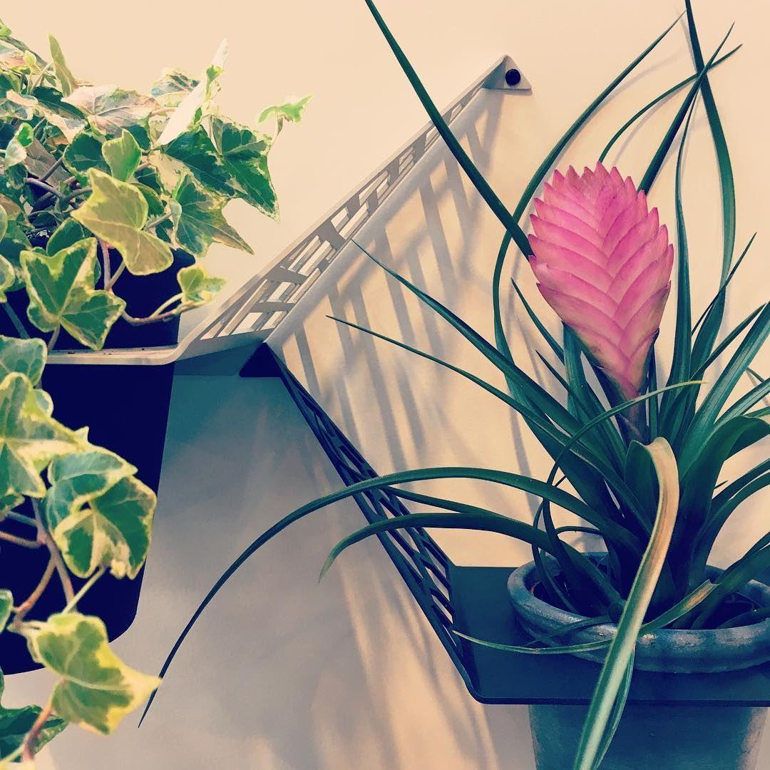 by dyb #bydyb (@bydyb) • Instagram-billeder og -videoer bydyb • Can't get enough of plants. Detail picture of @bydyb planthangers. #planteophæng #planthanger #bydyb #design #planter #plants #green #blomster #flowers