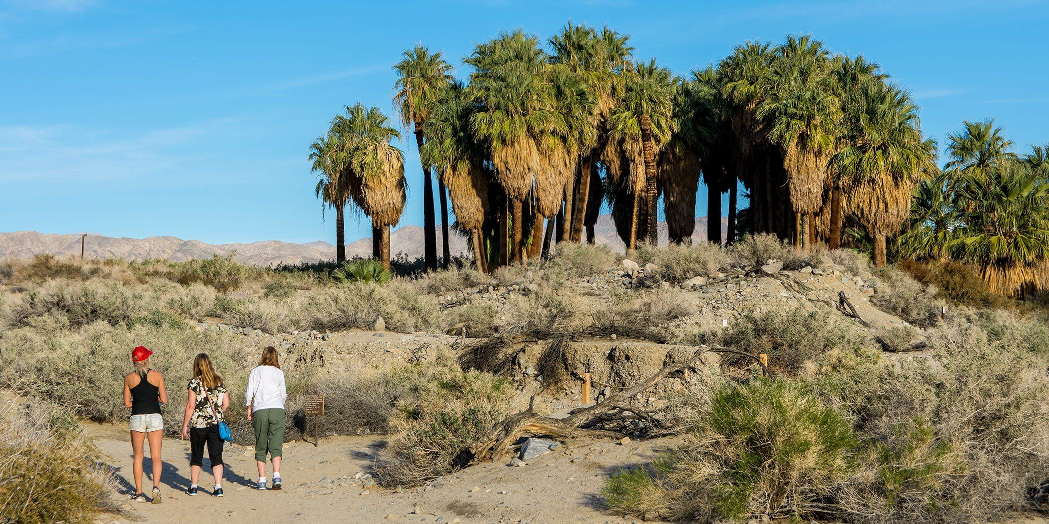 Photo of Winter Desert Destinations in the West | Via