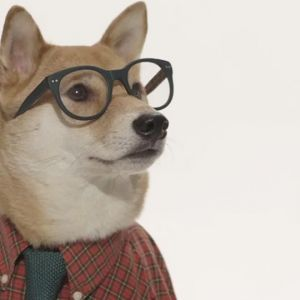 """http://fooyoh.com/menknowpause_lifestyle_living/9518186/a-short-documentary-on-the-origins-of-menswear-dog-and-its-clever-creators  A Short Documentary on the Origins of """"Menswear Dog"""" and its Clever Creators :: FOOYOH ENTERTAINMENT"""