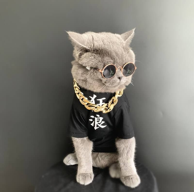 Gangster Cat Costume Cat Costumes Baby Cats Cute Baby Cats