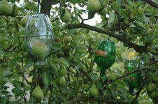 Obst, das in Flaschen wächst - bei Linkes keine Seltenheit.