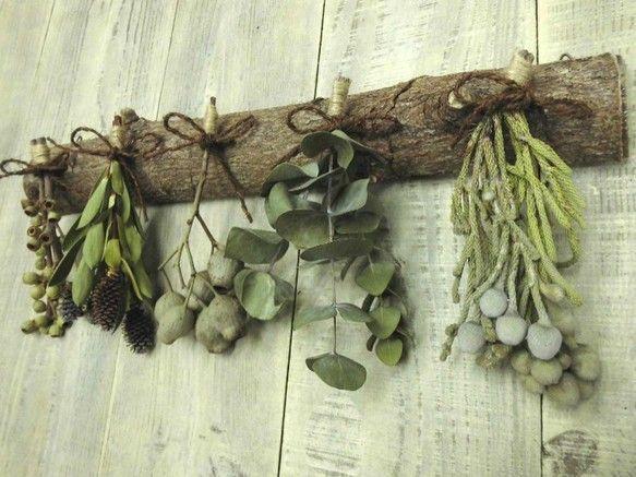 アフリカンプランツを主に珍しくて形の変わった木の実(左からアンバーナッツ、リュウカデンドロン、ベルガム、ユーカリ、ブルニア)をフィカスの幹にセットしました。フ...|ハンドメイド、手作り、手仕事品の通販・販売・購入ならCreema。