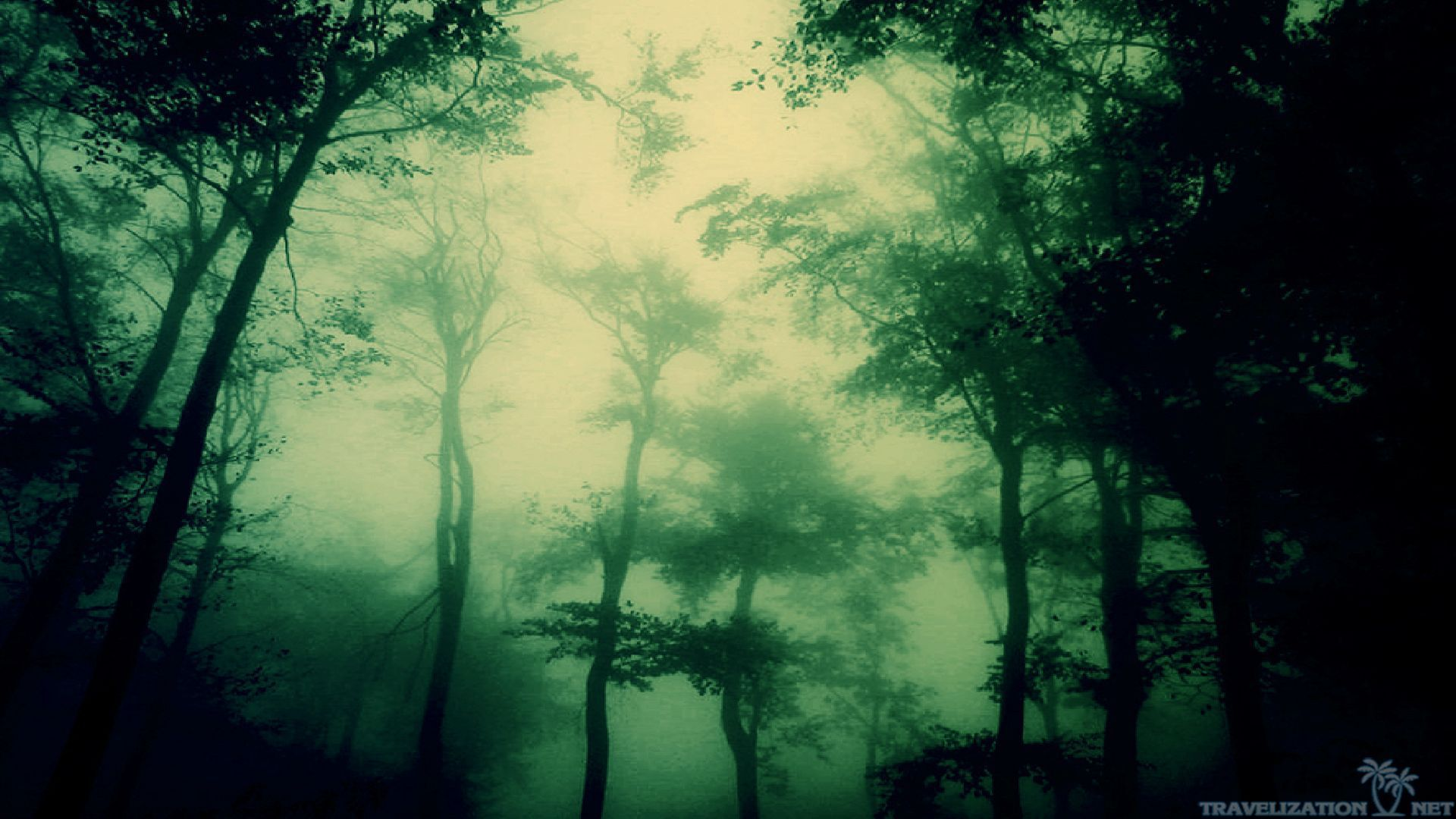 Dark Forest Wallpapers 1080p Natures Wallpapers