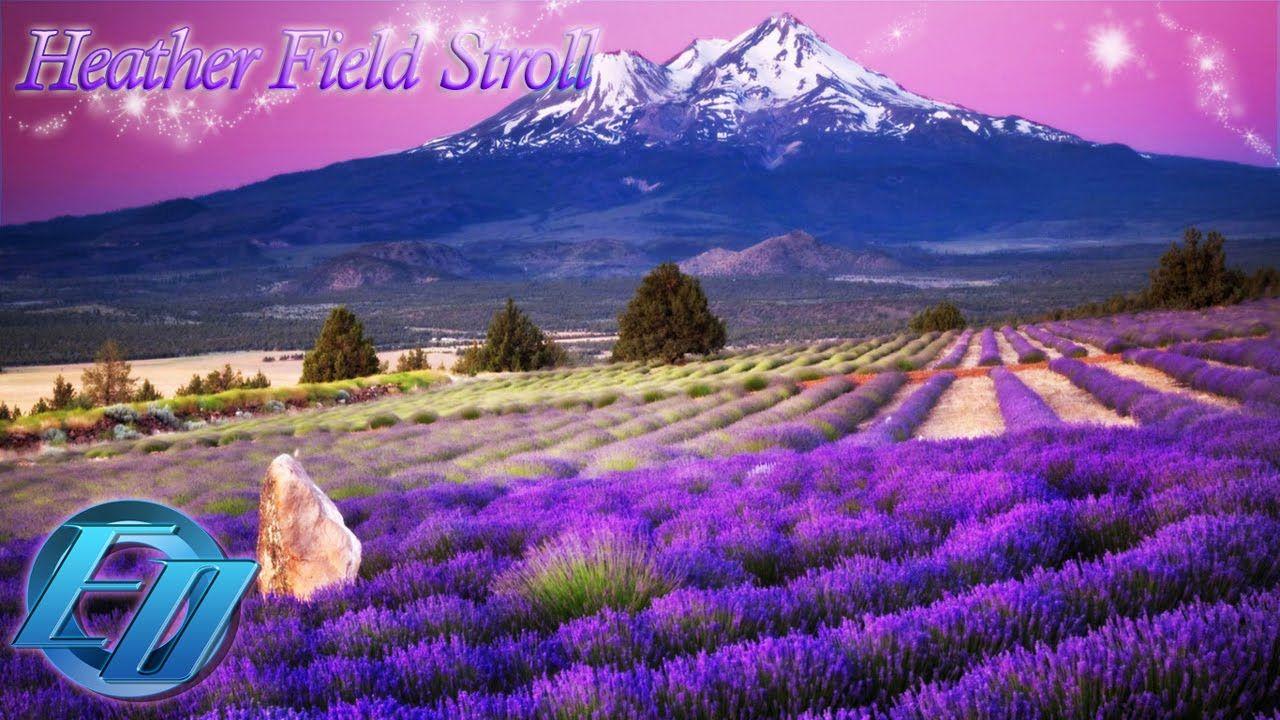 Heather field stroll idm chillout electronic relaxing