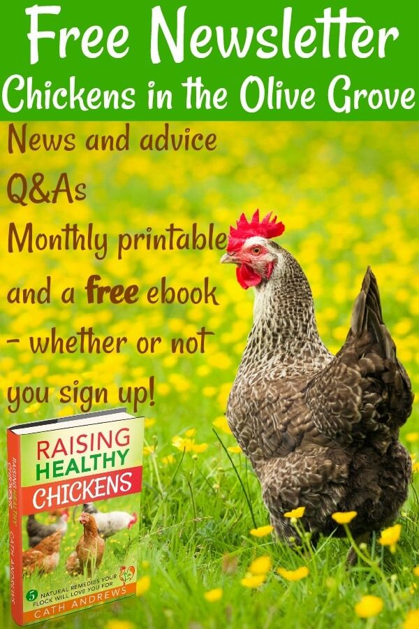 How to care for your chickens - naturally. | Chickens ...