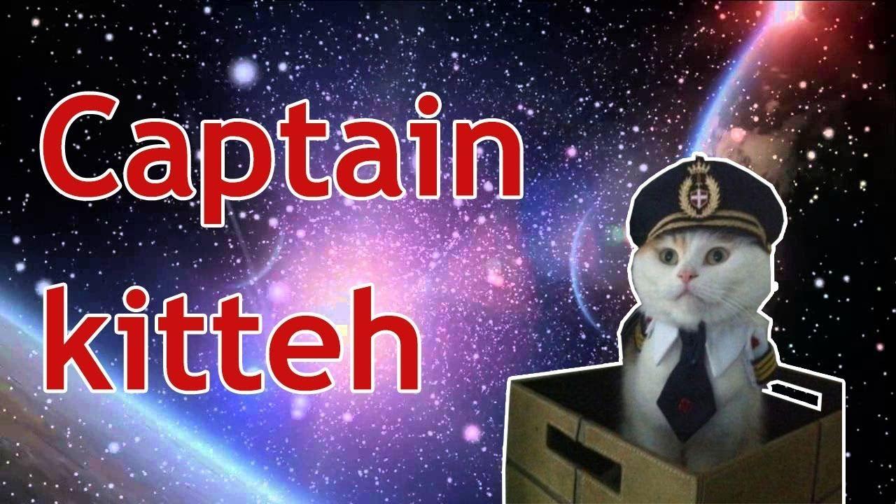 Dankest Cat Memes Youtube Cat Memes Memes Cats
