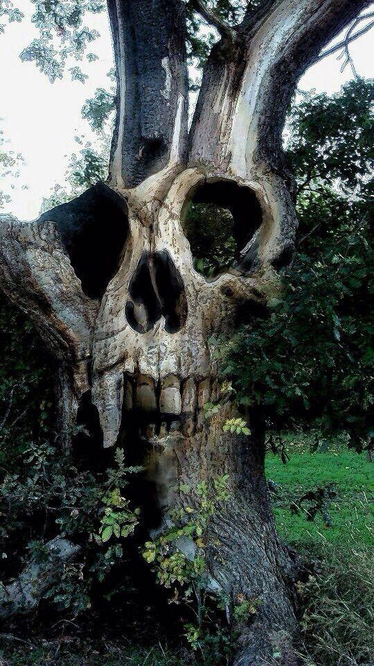 Картинки черепа с деревом известны