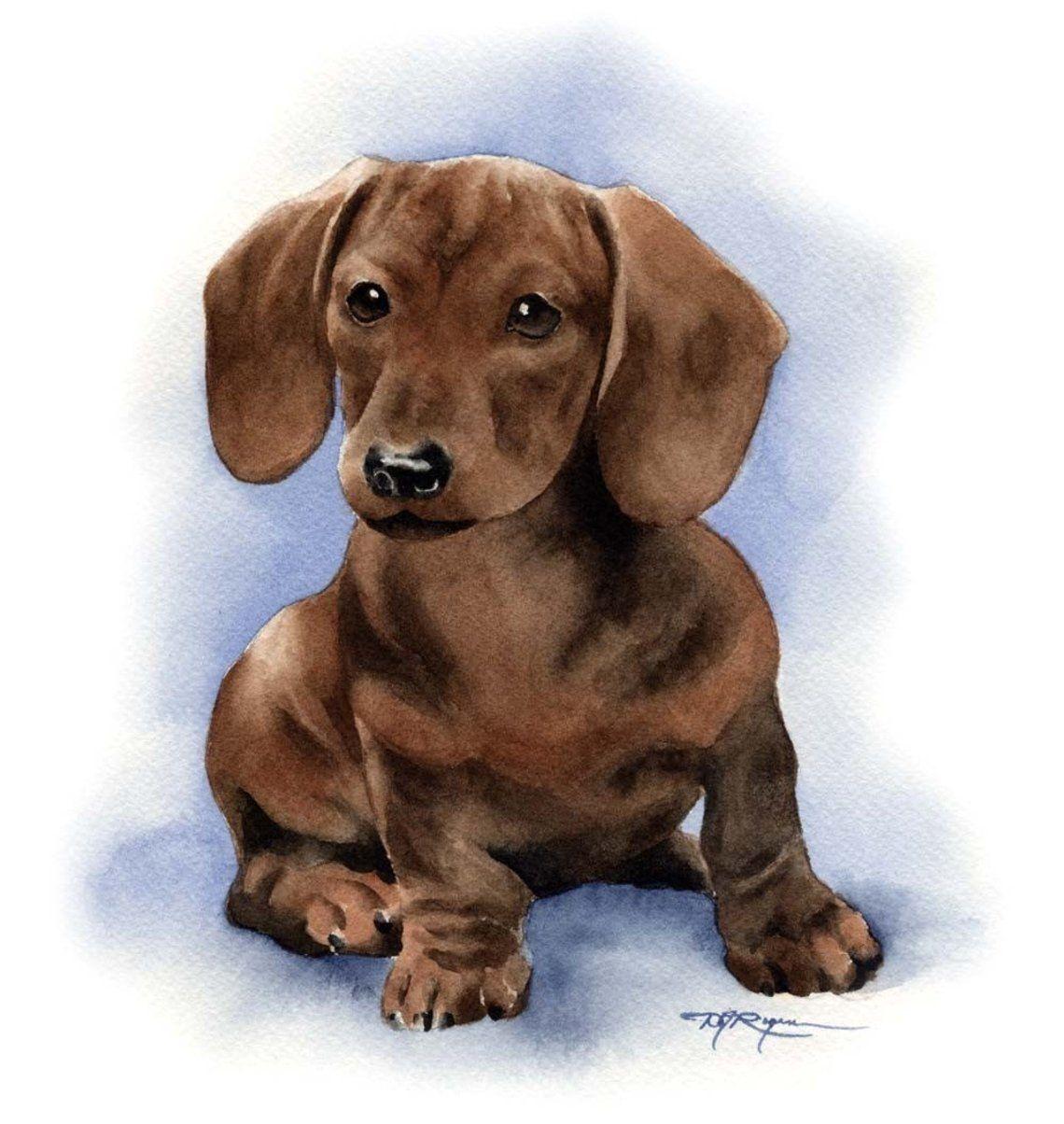 Pin De Beatriz Pena En Animales Hermosos Dibujos De Perros