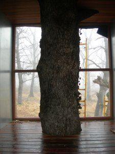 CUBI   Nome del progetto: tree House  Designer / s principale: Txuspo Poyo  Posizione del luogo: Foresta Dantzaleku, Alsasua, Navarra.  http://abitarelanatura.wordpress.com/2013/06/20/cubi/
