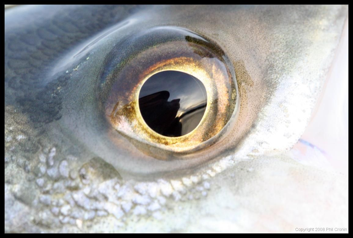 Fish Eyes Nature Animal Eyes Eyes Fish Eye Close Up
