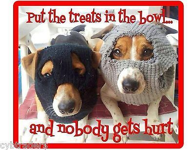 Photo of Funny Jack Russell Terrier  Dog  Bandits  Refrigerator / Tool Box  Magnet  | eBay