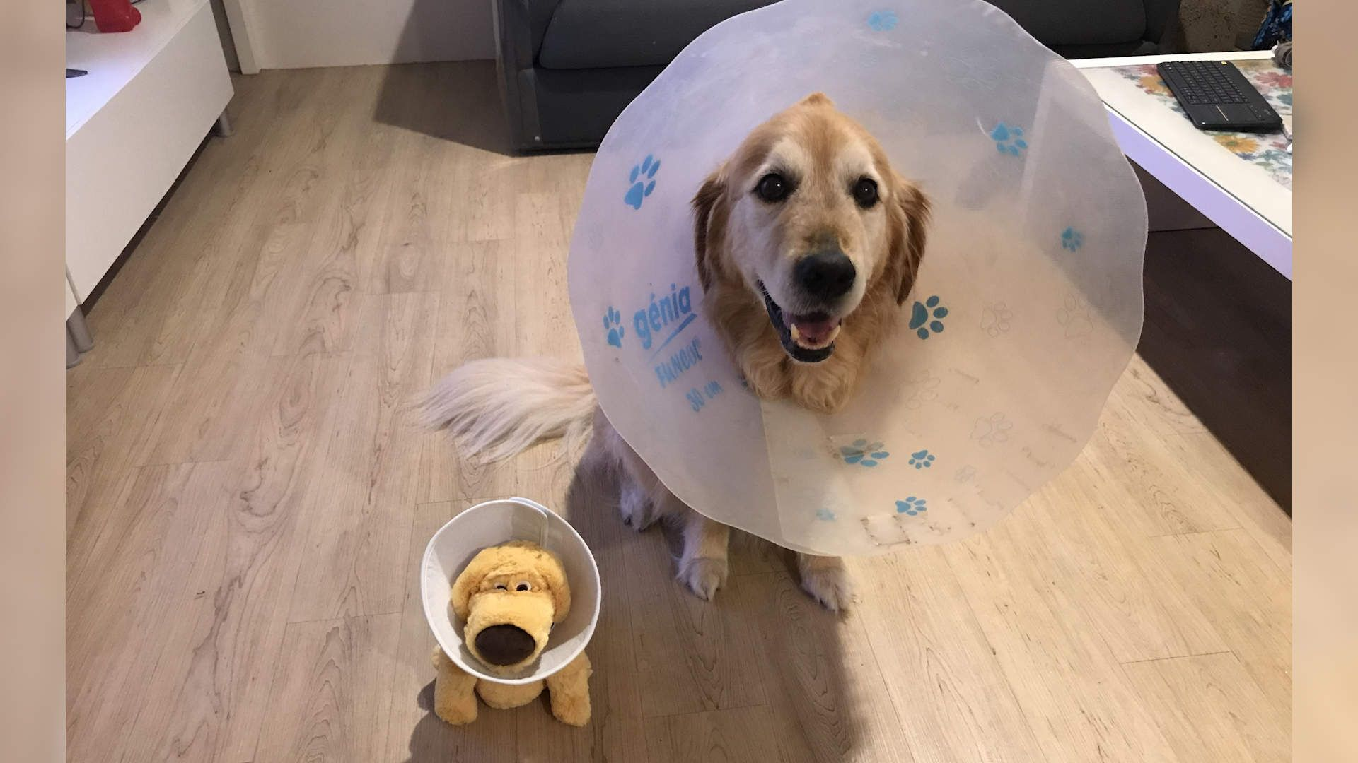 Dog Wearing Cone Of Shame Gets A Special Friend Who S Just Like Him Cone Of Shame Dog Cone Sick Dog