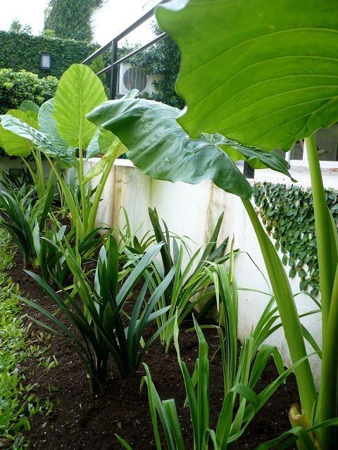 35+ Plantas tropicales exterior ideas