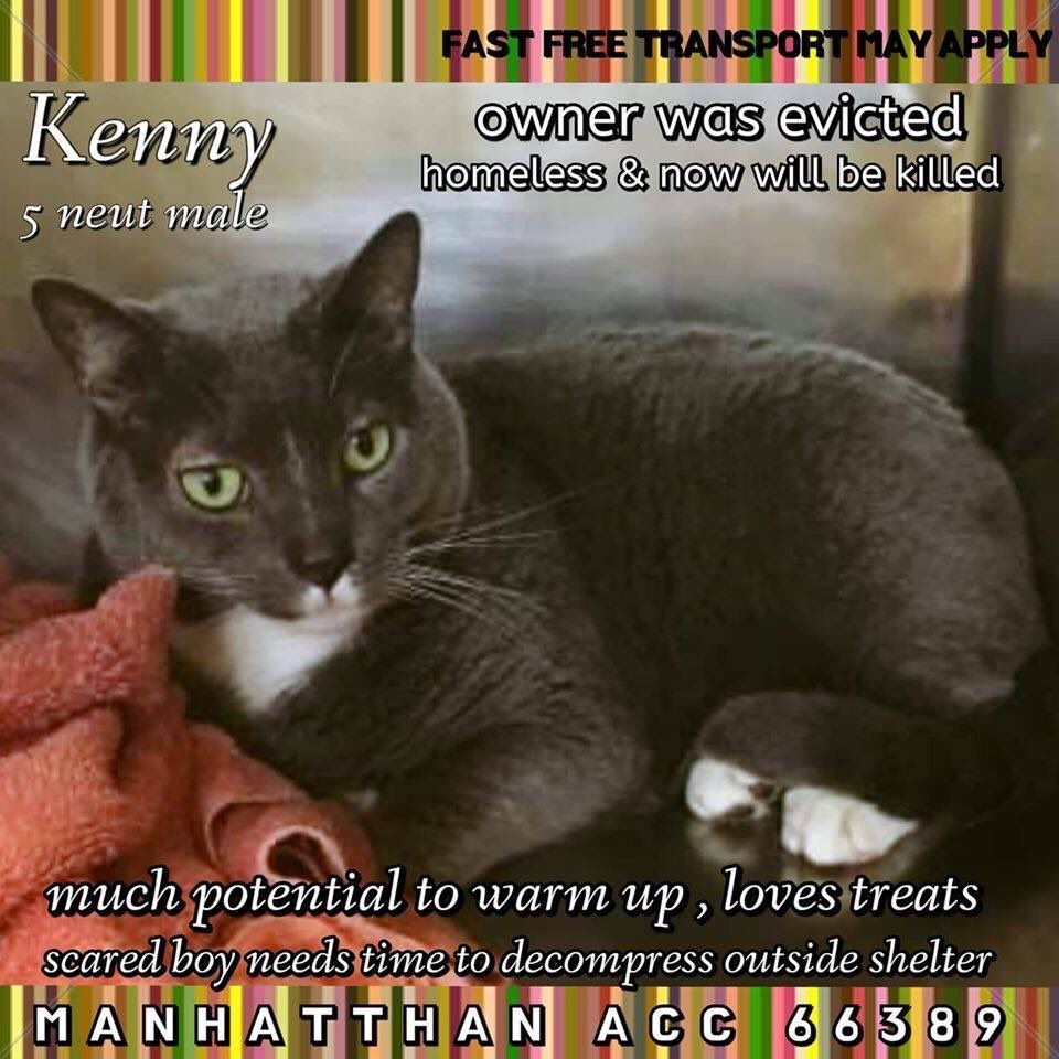 Catsrangels2 On Twitter Cats Cat Today Dogs Online