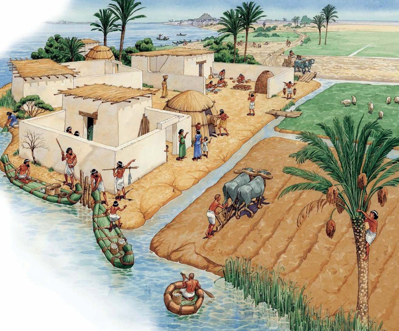 Agriculture and Food Production in the Old Kingdom; The Livelihood of a Civilization