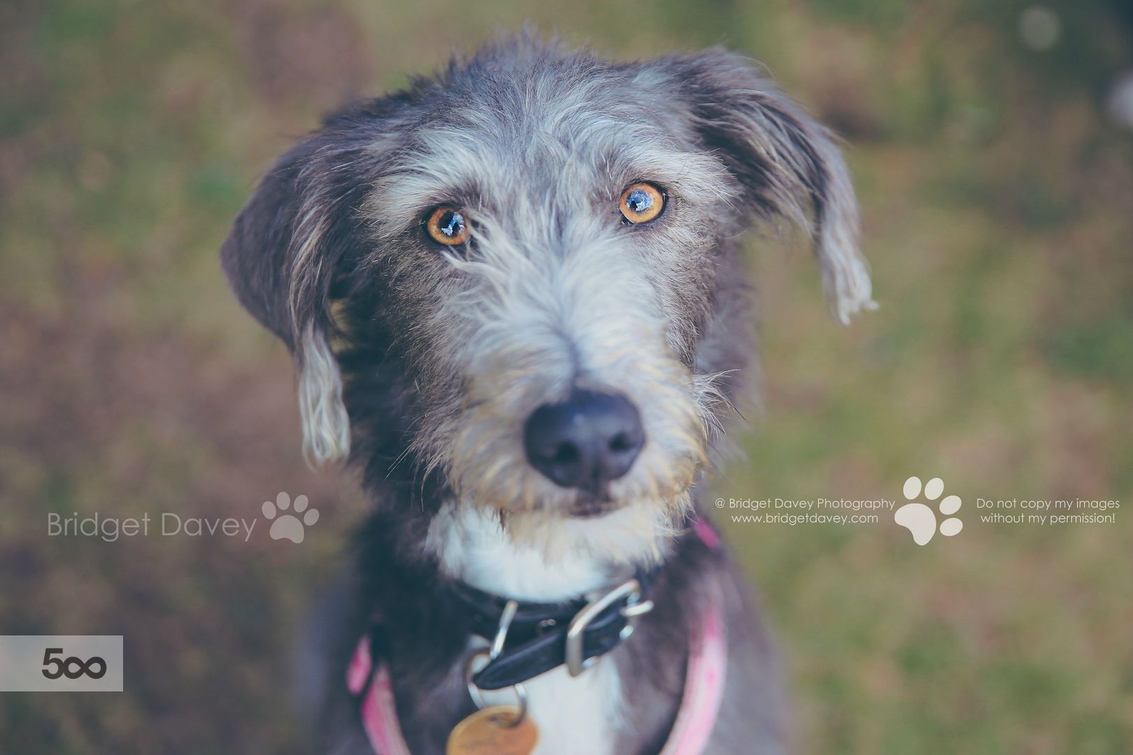 The Dogs Dog Photography Bedfordshire By Bridget Davey On 500px