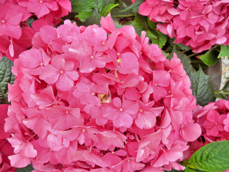 Flowers in Jutland, Denmark.