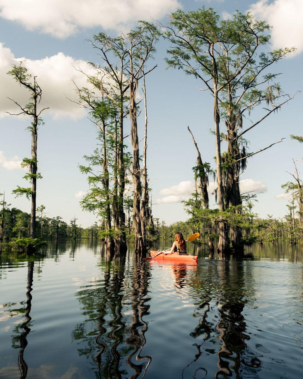 Louisiana bayou monroe la louisiana photography