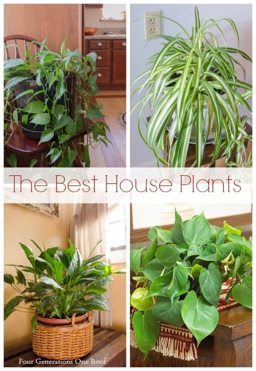 Common House Plants My Mom Her