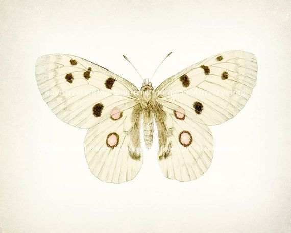 Vintage+Butterfly+Illustration+Natural+by+HighStreetVintage,+$15.00