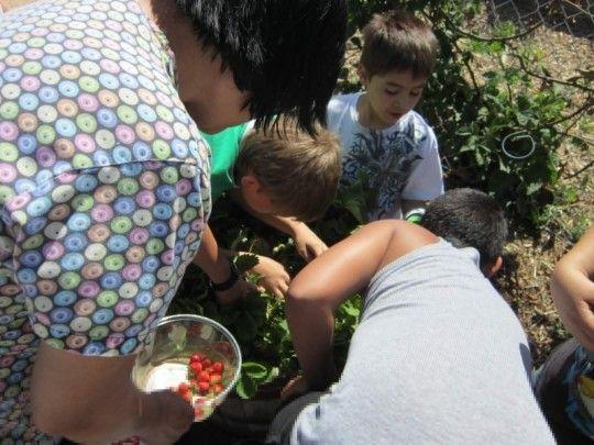 Junior Master Gardeners Of Southern Nevada Las Vegas, Nevada #Kids #Events