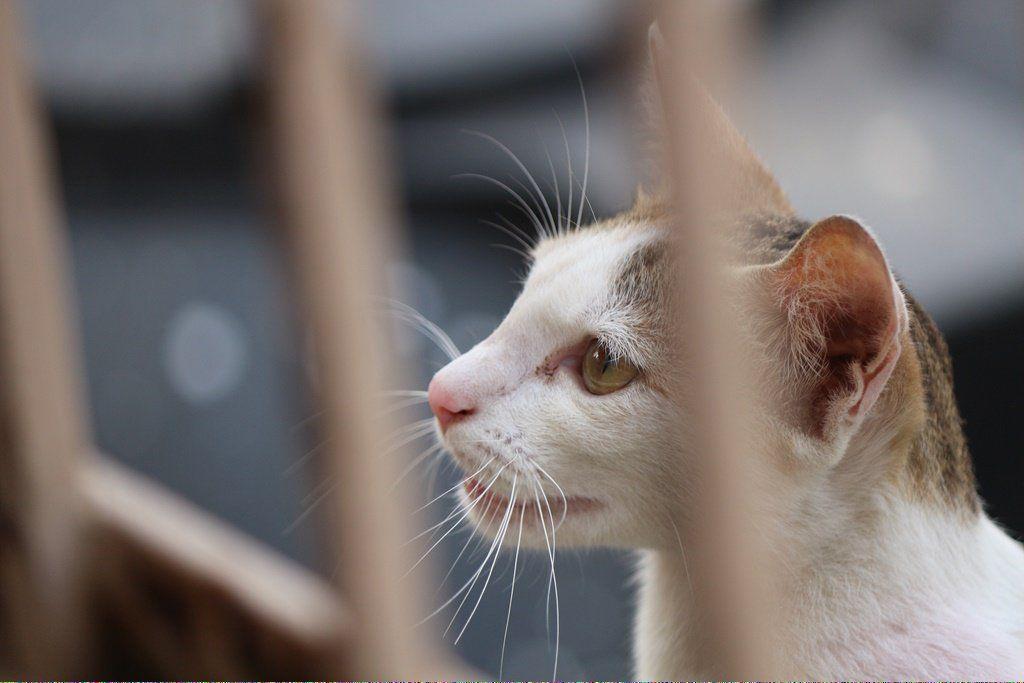 Catskill Ny Cats6toes Post 348610992 Cat Adoption Why Do Cats