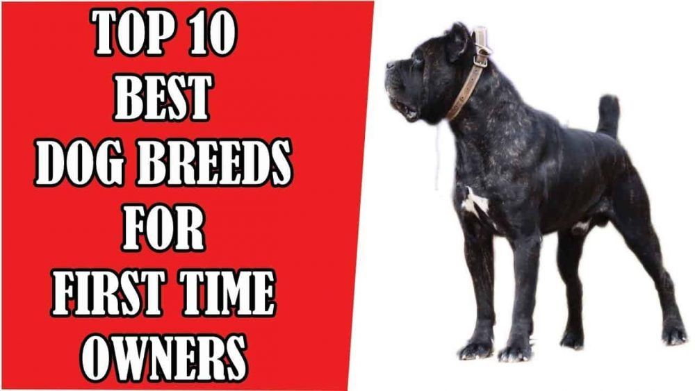 Top 10 Best Dog Breeds For First Time Owners Dog Lover Planet