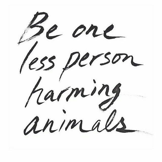 Care For Animals Animal Love Vegan Vegan Quotes Animals