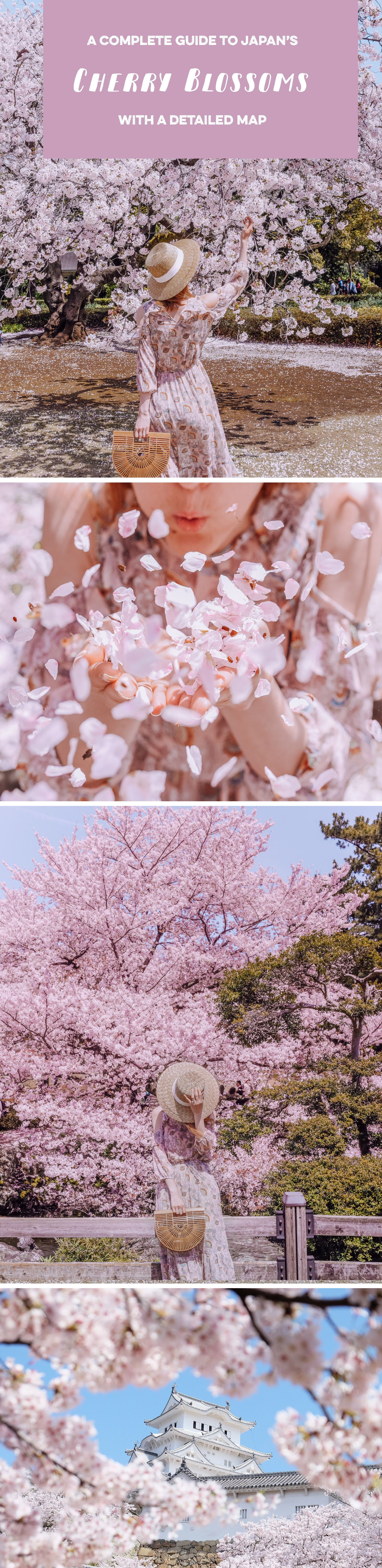 Japan Cherry Blossom Guide This Life Of Travel Cherry Blossom Japan Japan Japan Travel Destinations