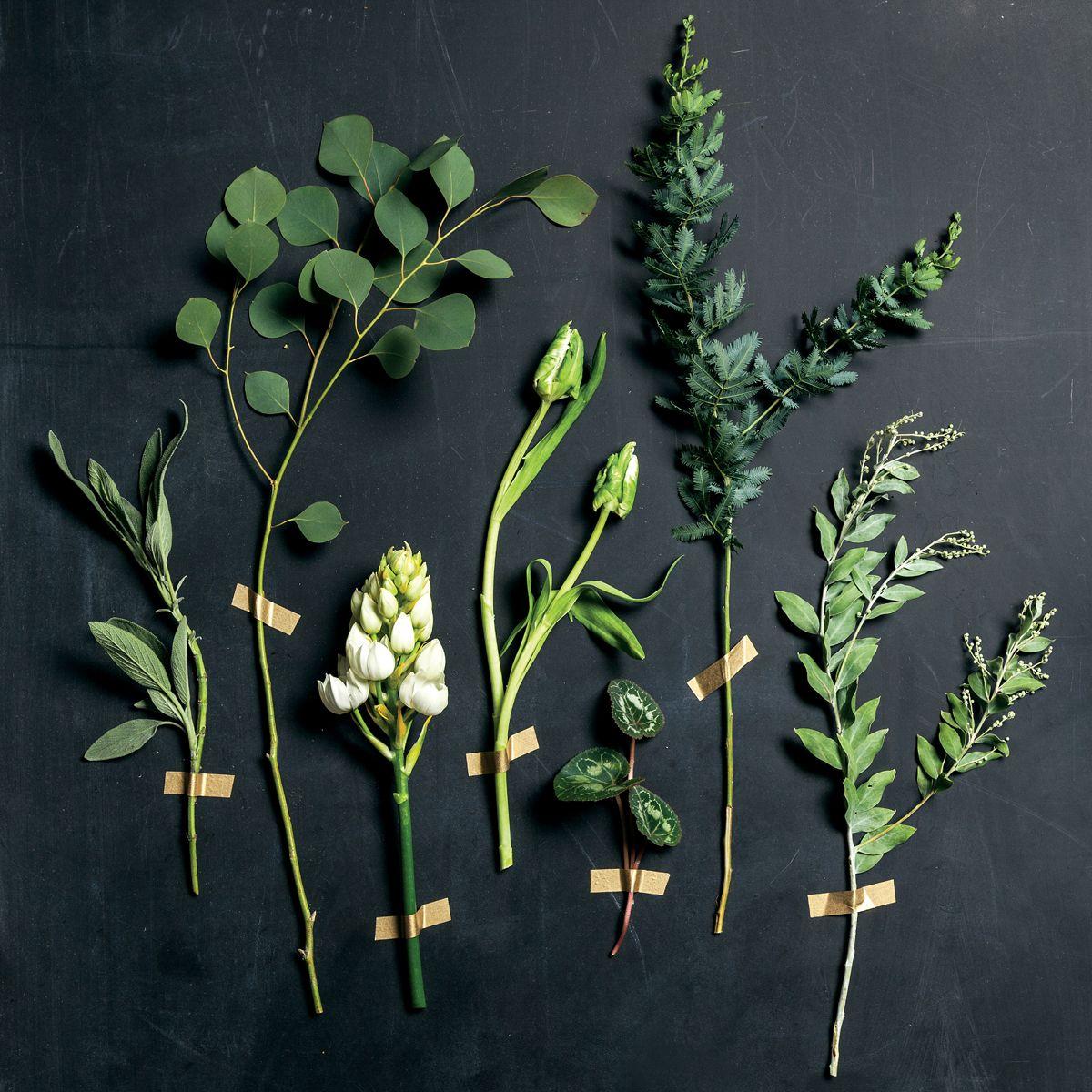De izquierda a derecha: Sage, Silver Dollar Eucalyptus, Ornithogalum, Weber's Parrot Tulip, Cyclamen Foliage, Italian Mimosa, Acacia
