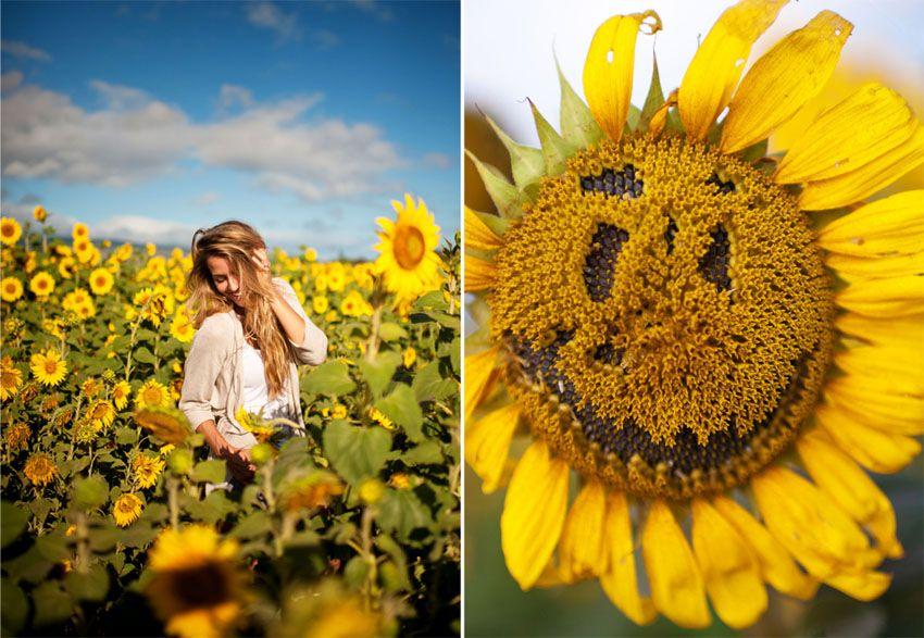 B : North Shore Sunflower Fields » Memories Aquatic Oahu ...