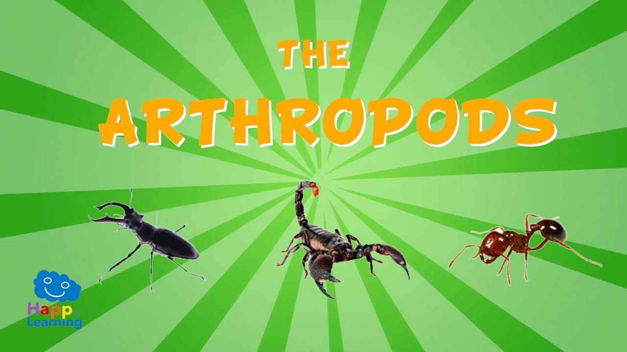 The Arthropods Educational Video For Kids Science Videos For Kids Educational Videos Science Videos