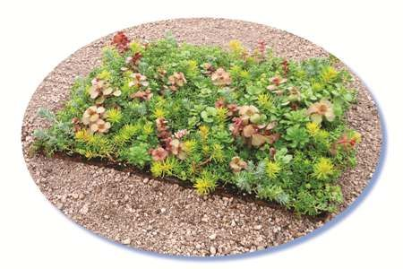 Etera Sedum Tile Color Max This Blend Of Sedums Is For The Roof Where Maximum Color Is Desired This Comes In The Form Of B Sedum Green Roof Healthy Plants