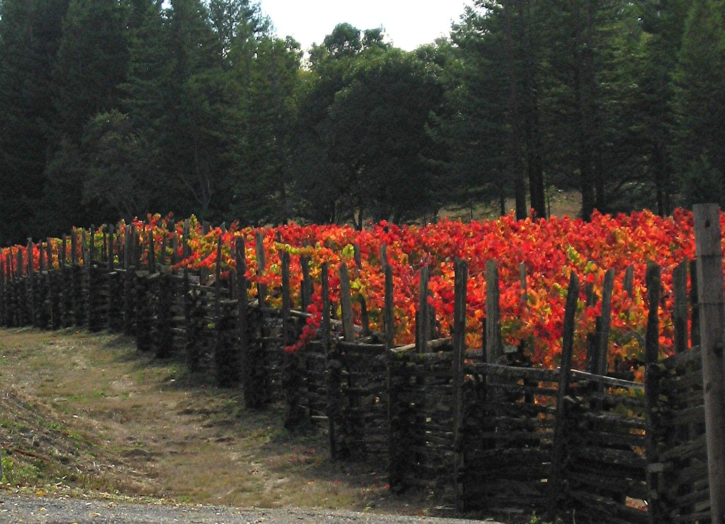 The fall in Napa/Sonoma is our favorite time of year.  Vineyards of Anderson Valley in the fall.