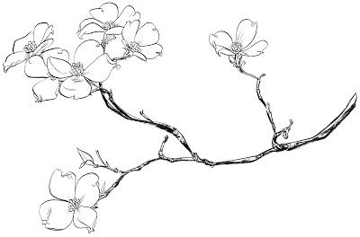 Dogwood Tree Flower Coloring Pages Sketch Page