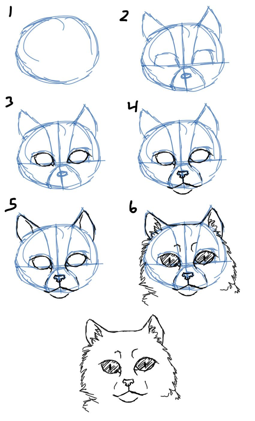 How To Draw How To Draw Cat Faces Heads Front View How To Draw