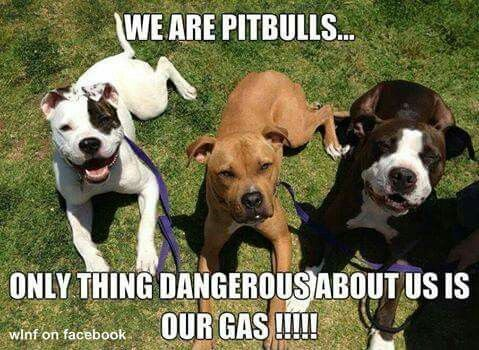 Watch Dave Wilson Perspective About American Bully With Images