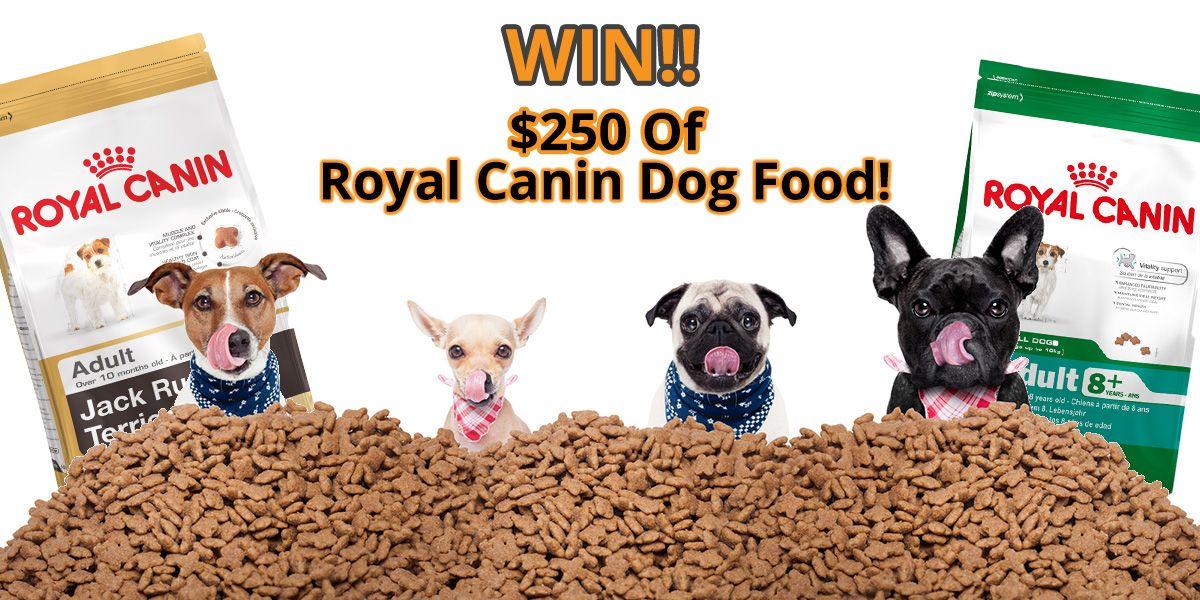 Win 1 Of 2 250 Royal Canin Dog Food Packs Pets Royal Canin