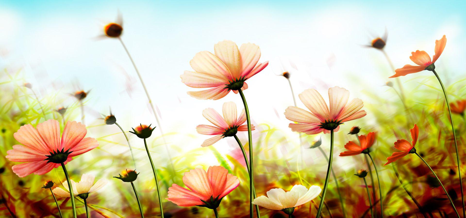 Fundo De Flores Lindas Da Natureza Summer Beach Wallpaper Flower Wallpaper Summer Wallpaper