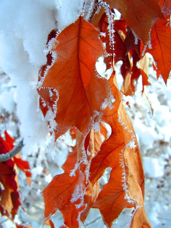 гурцкая картинка на телефон первый снег рисунке изображена живая