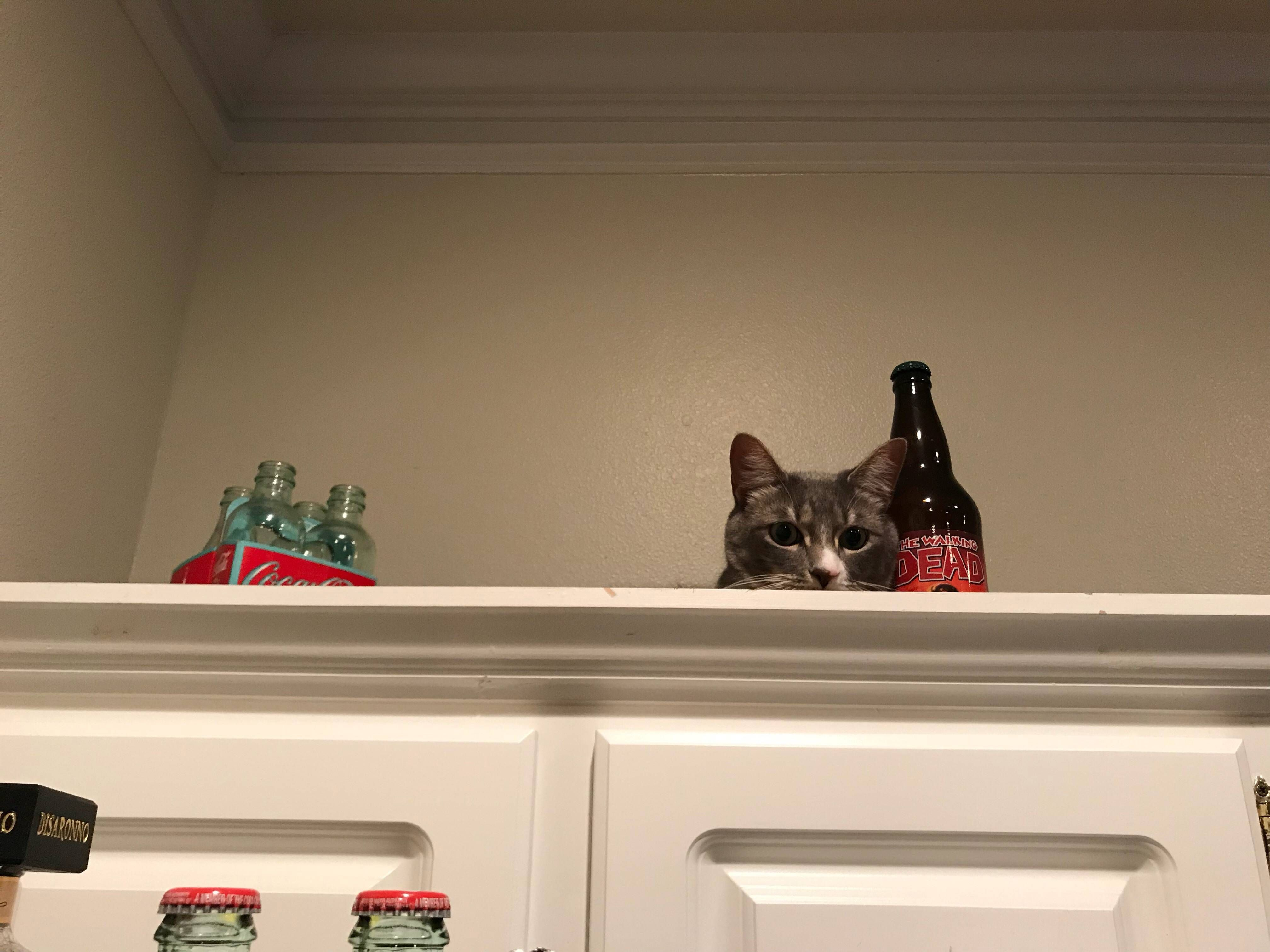 Someone found a new hiding spot hes not supposed to be in